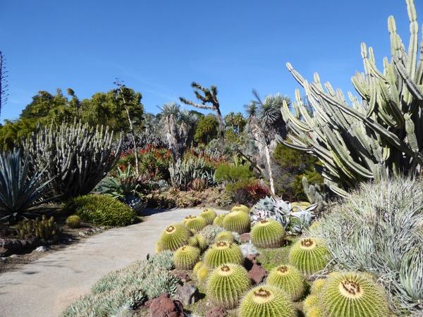 Huntington Desert Garden cacti