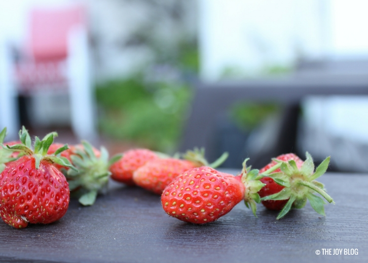 Container-grown Strawberries // www.thejoyblog.net