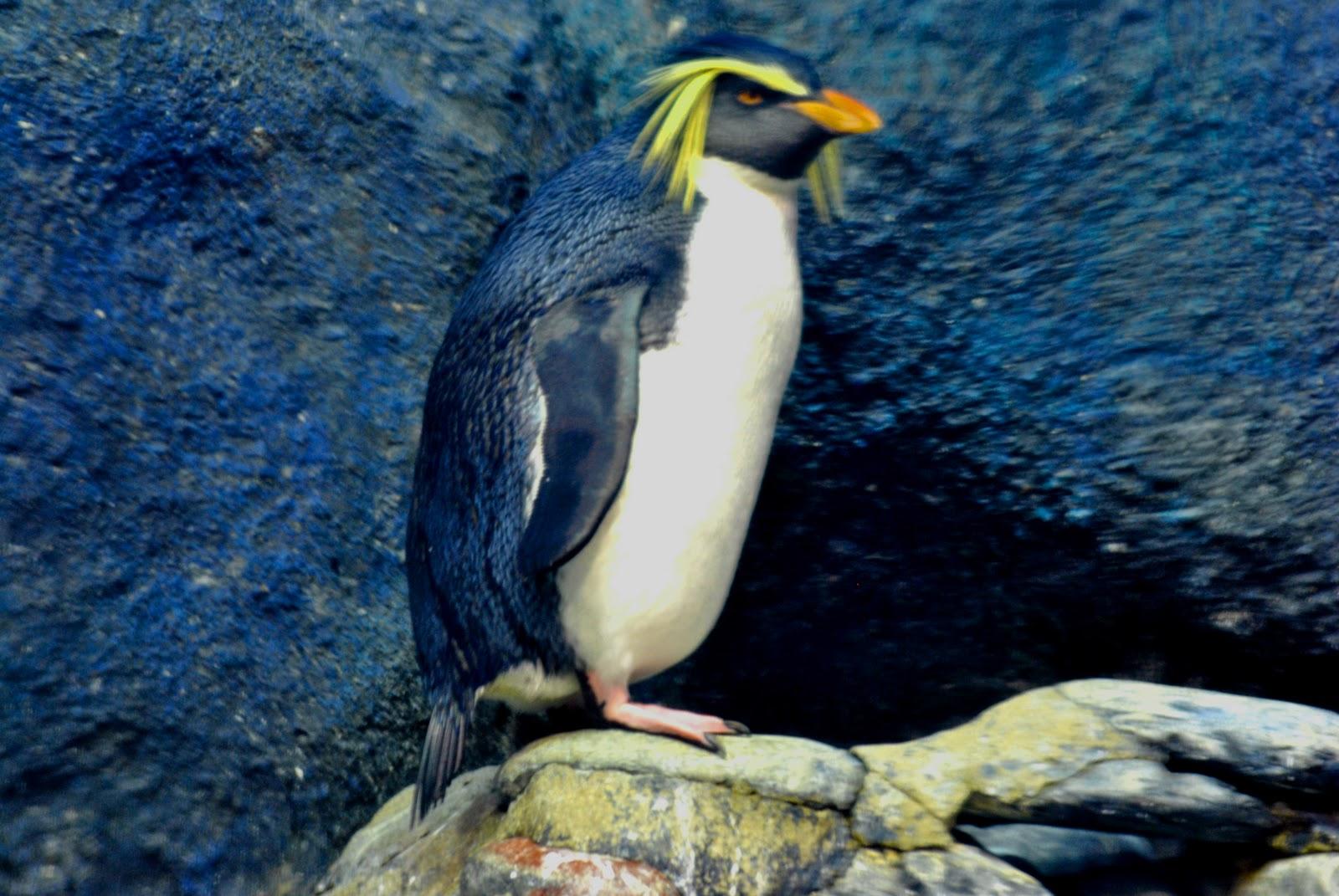 Langkawi Ink.Com: Rockhopper : The Penguinarium Underwater World ...