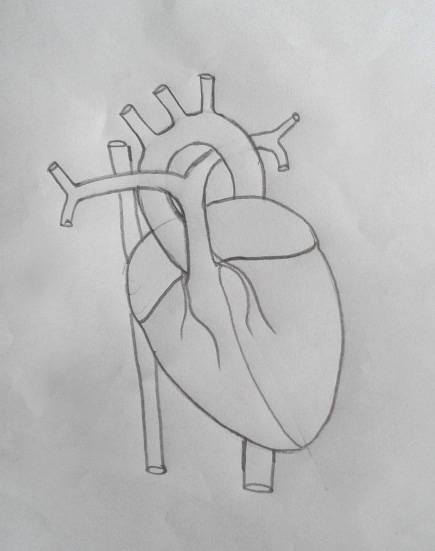DRAW IT NEAT : How to draw human heart labeled