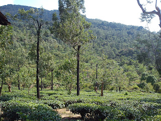 Manjolai Tea estate