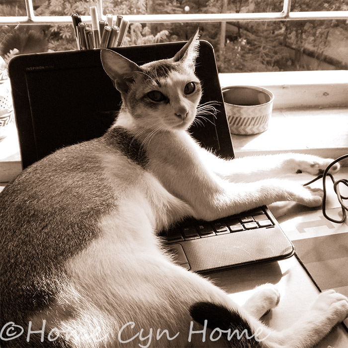 A cat is a must have in a creative's studio,they are good at guarding laptops and keeping you calm