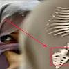 Ternyata!!!..Inilah Asal Usul Sebenarnya Dari Istilah: Wanita Tercipta dari Tulang Rusuk Pria