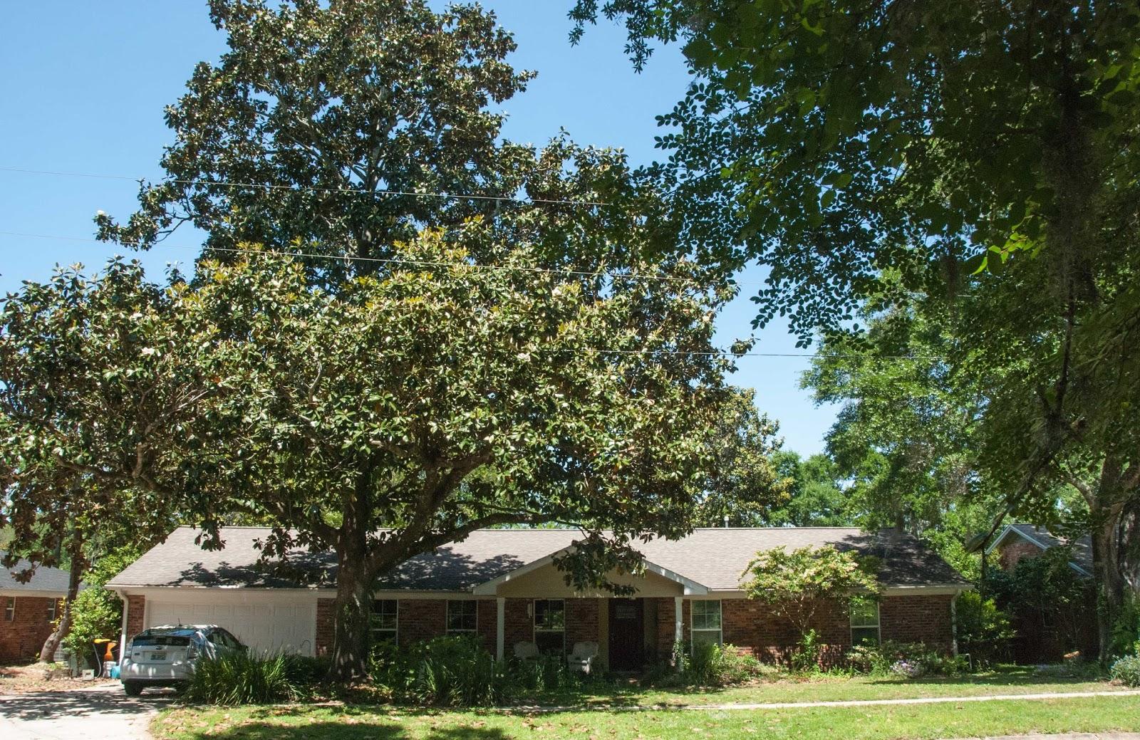 Gaia Garden Living With Southern Magnolias