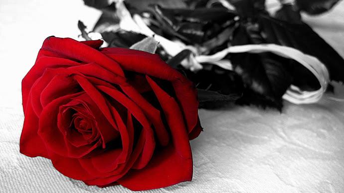 Wallpaper: Rose of Love