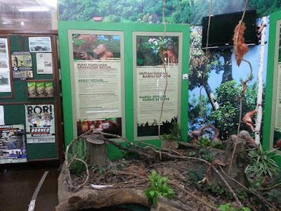 Tempat menarik di Sandakan: Sepilok Orangutan Rehabilitation Centre Sandakan