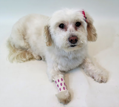 Pet Health Insurance, Dog health insurance, dog health, pet health, dogs, pets