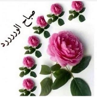 صباح الورد