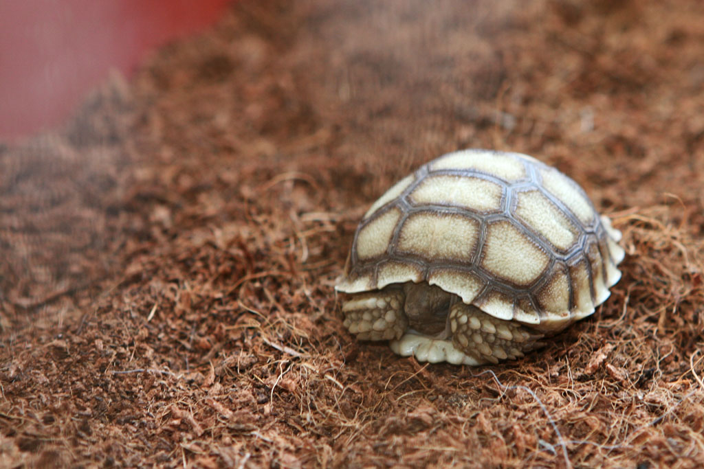 Tortoise Rescue - Mother Nature's Son