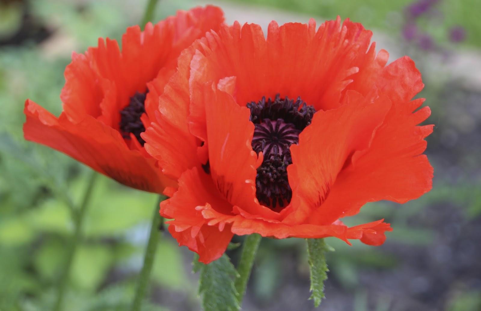 VISUAL SAINT PAUL: Armistice Day, Remembrance Day, Veterans Day