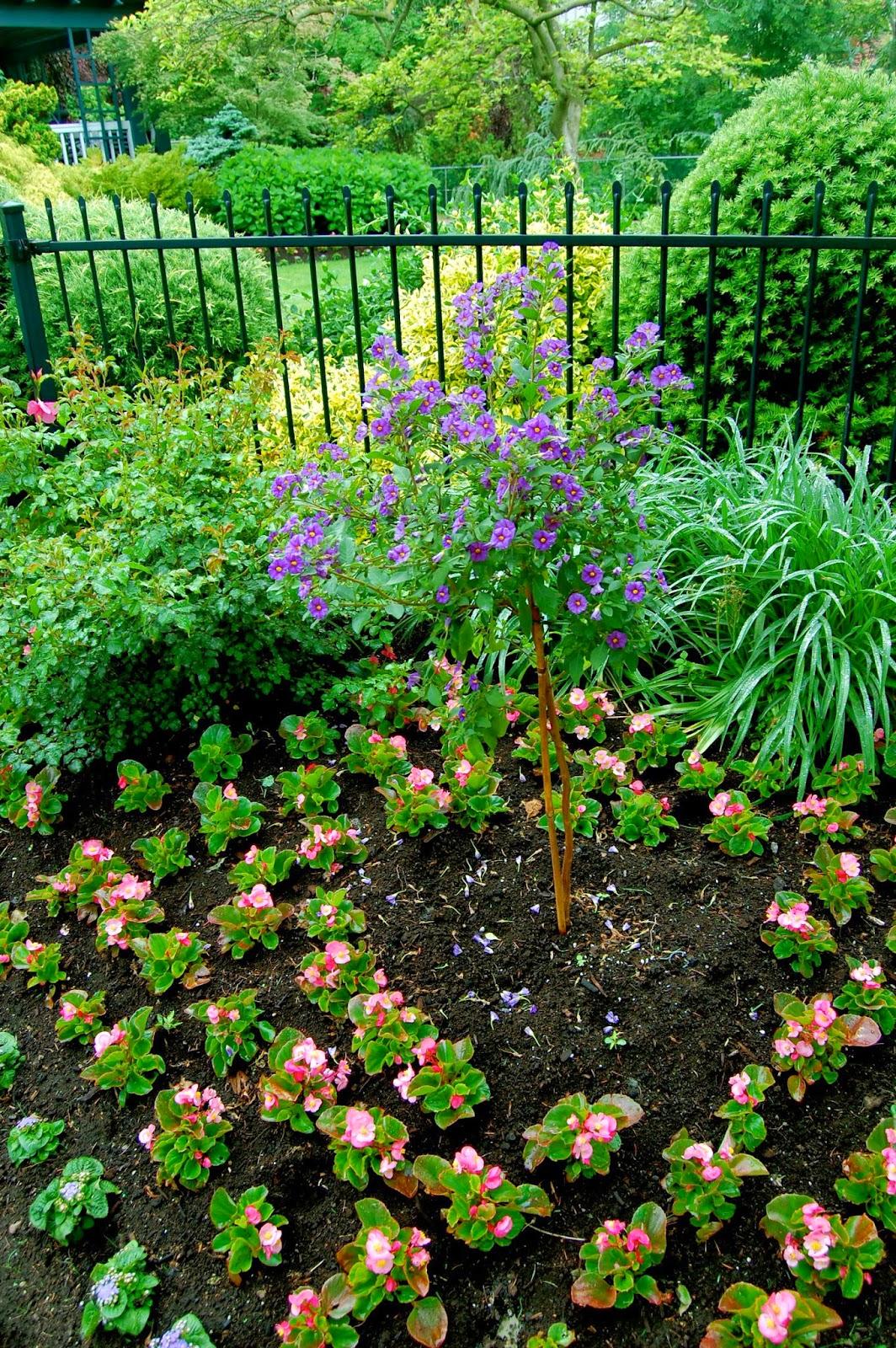 Astrid's Garden Design: Problems Affecting Impatiens