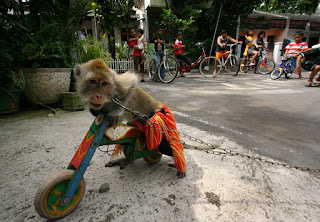 Tari Topeng Monyet, Topeng Monyet, Monkey dance, Jakarta, animal video, funny video, animal planet, animal kingdom, monkey, street dance