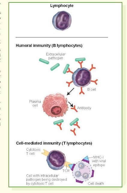 Innate and Adaptive Immunity, Innate Immunity, Adaptive Immunity