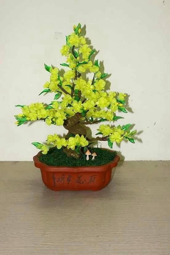 Goc bonsai cay hoa mai o Chua Boc