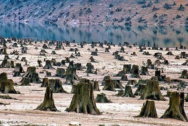 Китайская газета об экспорте леса из России: Сибирь является территорией КНР