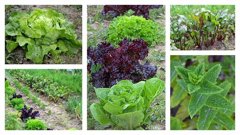 grill, co na grill, rozpalamy grill, szaszlyki, majowka, weekend, ogrodek, ogrod, warzywa, salata, mieta, ziola z ogrodu, hodujemy warzywa, hodujemy ziola,