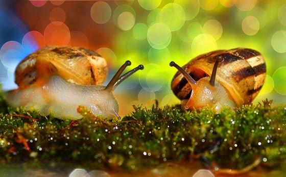 Snails, Beautiful Snails On Up-Close Photos