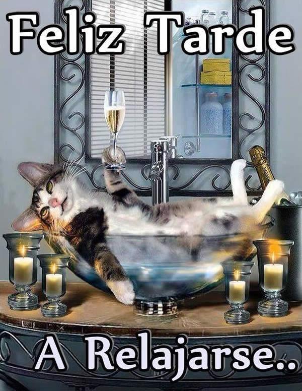 Feliz Tarde gato