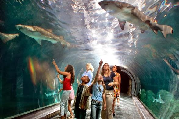 aquarium adventure jersey places visit camden philadelphia tunnel shark tickets waterfront attractions discount nj fun place philly splash zoo deal