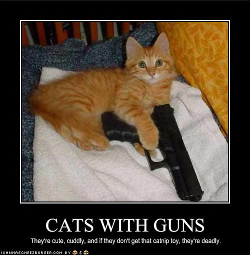 Funny Gag Gifts Funny Cat Photos Even Funnier Captions