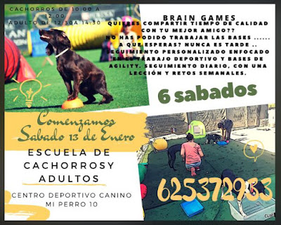 obediencia canina en madrid