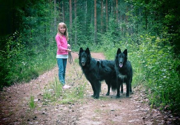 belgianshepherd belgian sheepdog belgi