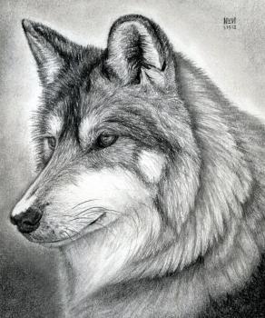 Como Desenhar Uma Cabeca De Lobo Desenhos Hd