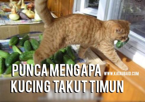 Punca Mengapa Kucing Takut Timun