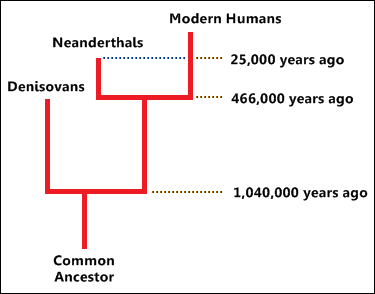 The first Asians were not Homo erectus | Patagonian monsters