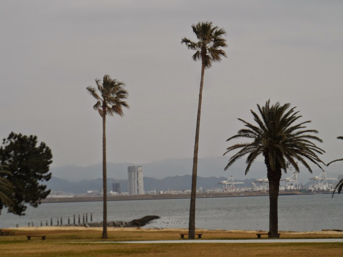 Port city as a backdrop behind the three palms