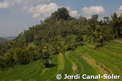 Campos de arroz escalonados en las montañas