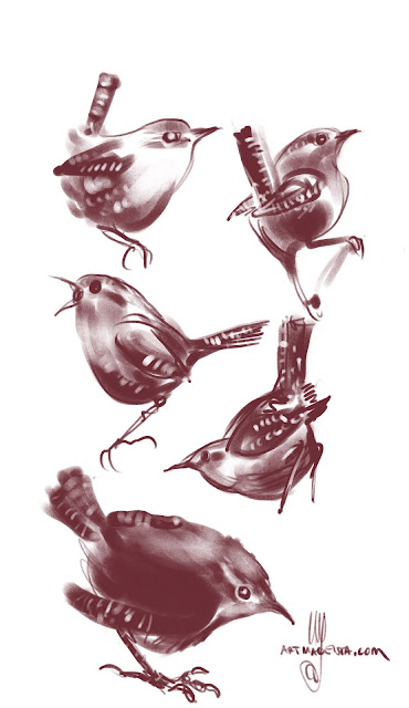 Winter wrens bird drawings by Artmagenta