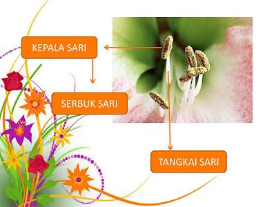 Fungsi kepala sari