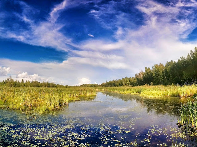 Mer Blue Bog Summer Photo by Viliam Glazduri