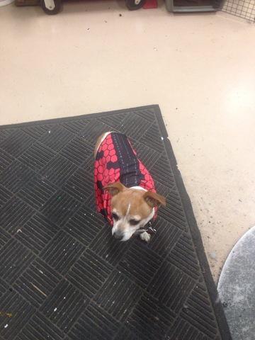 Bulk Buy Dog Food Tins