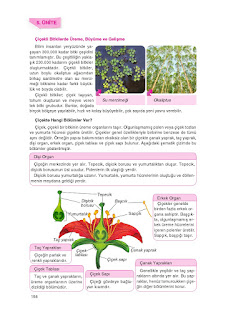 8. Sınıf Fen Bilimleri Ders Kitabı Cevapları Tutku Sayfa-157