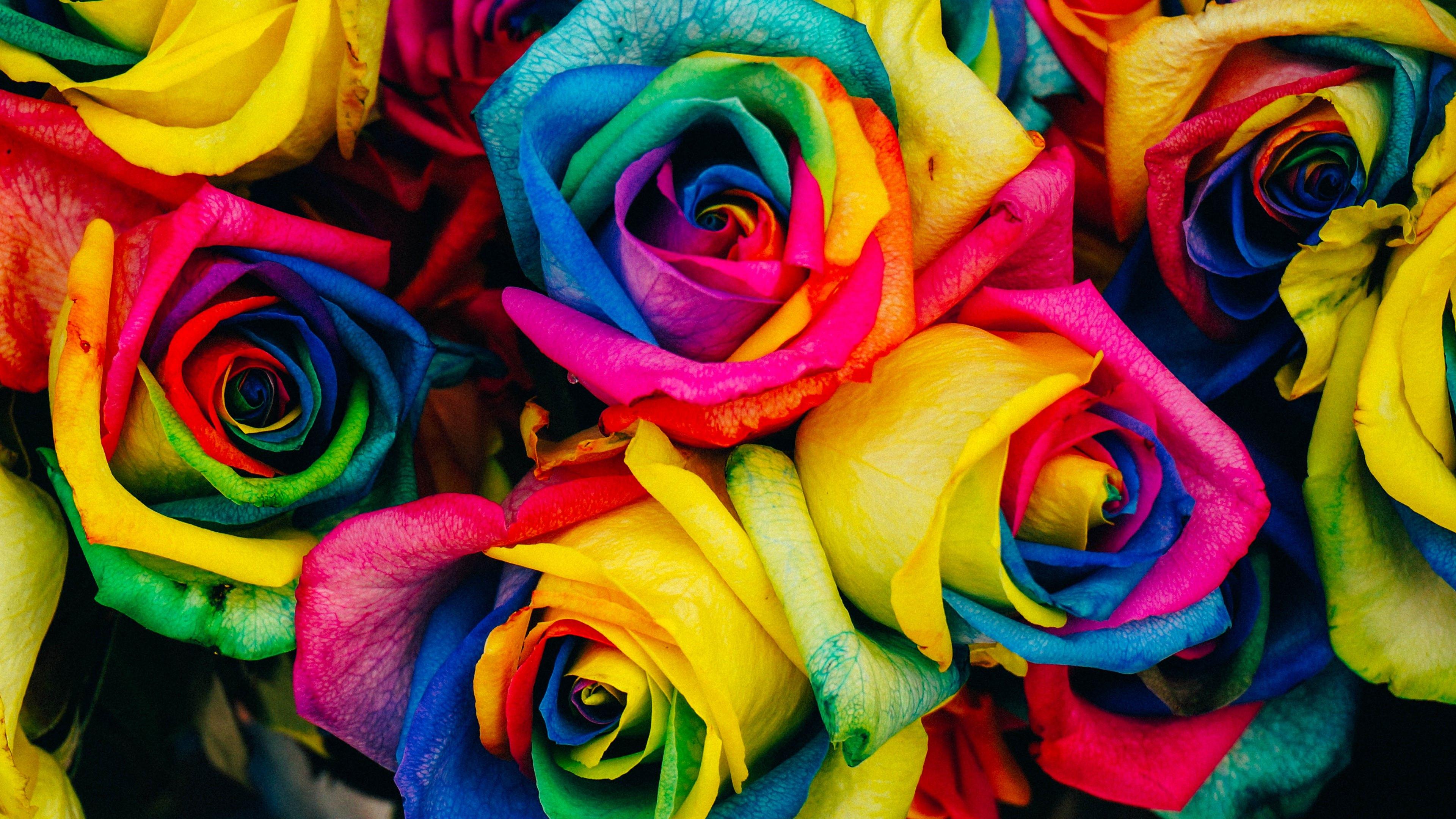Hd wallpaper rainbow - Wallpaper Rainbow Of Roses Ultra Hd 4k 3840x2160