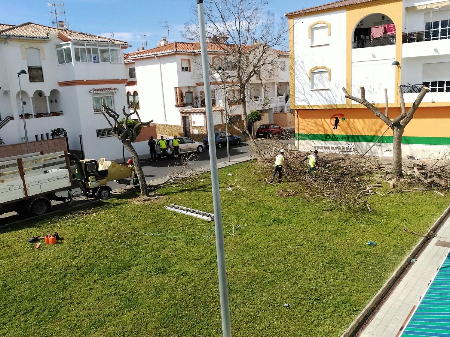 Motril digital ciudadanos motril consigue que comiencen for Trabajo de mantenimiento de jardines