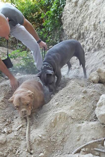 Giải cứu chú chó bị chôn sống