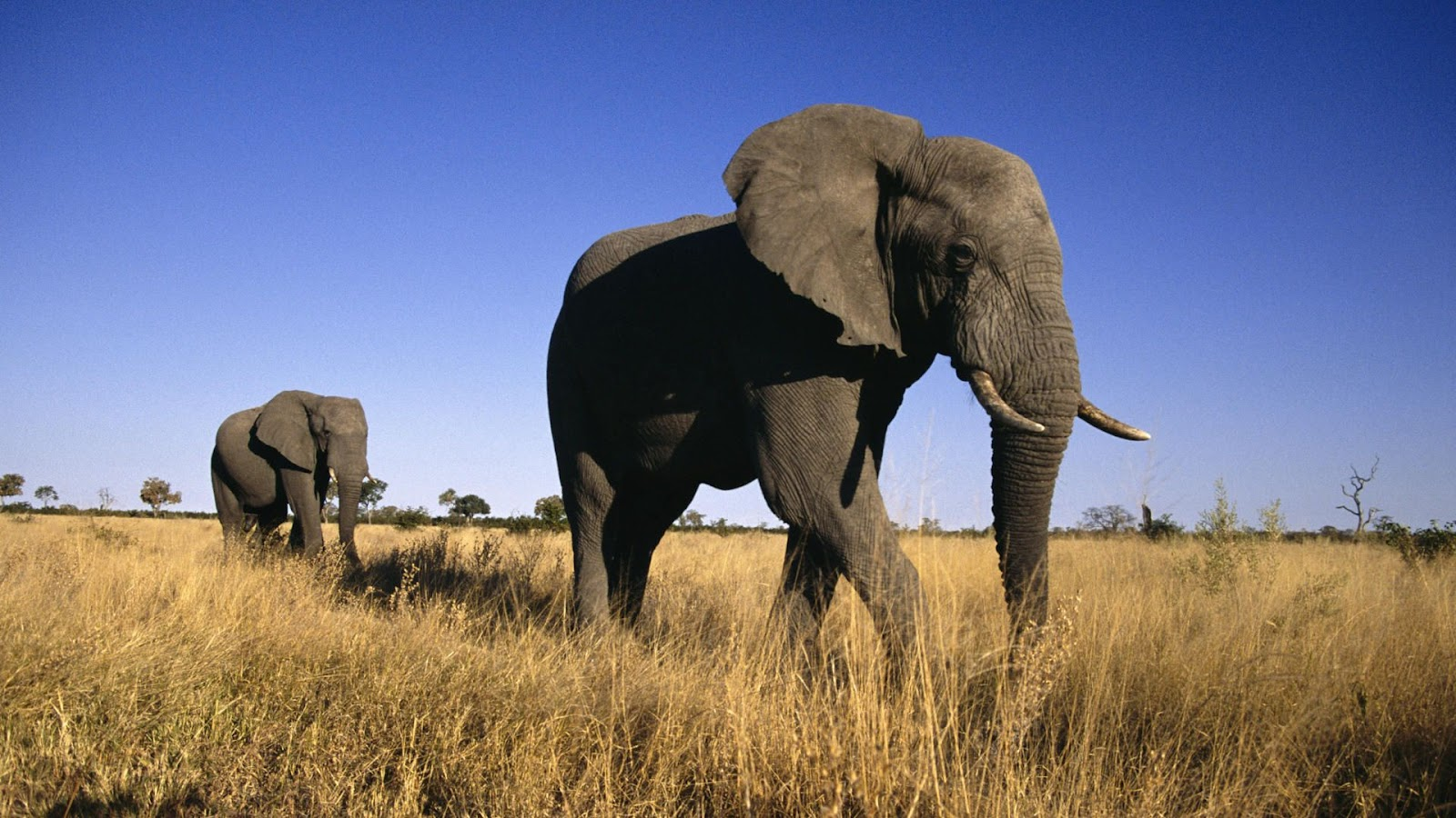 Wild elephants gather inexplicably, mourn death of
