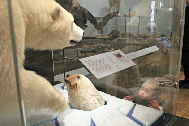 Polar bear and seal at the Royal Ontario Museum