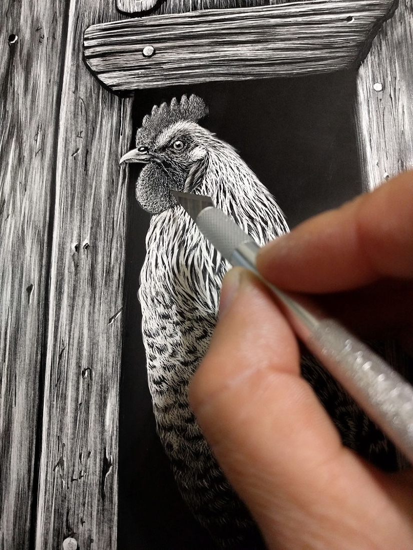 13-Working-on-the-Rooster-Cathy-Sheeter-Hyper-Realistic-Scratchboard-Wild-Animal-Drawings-www-designstack-co
