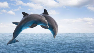 dolphins dream meaning