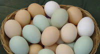 Kandungan Gizi Telur Berdasarkan Pendapat Ahli Gizi