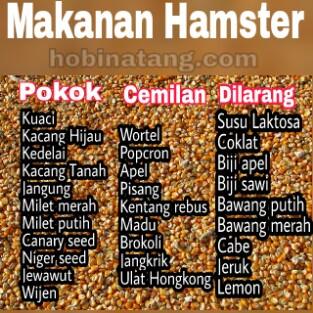 Makanan Untuk Hamster yang Pokok dan Dilarang
