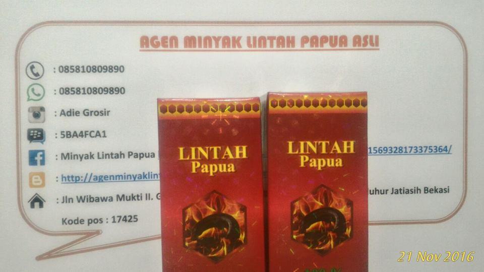 085810809890 agen minyak lintah papua asli di medan agen minyak