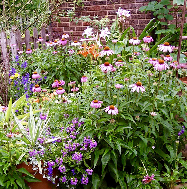 Perennial garden with coneflower, larkspur, lilies, and angelonia.