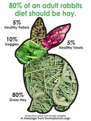 rabbit diet plans