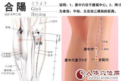 合陽穴位 | 合陽穴痛位置 - 穴道按摩經絡圖解 | Source:xueweitu.iiyun.com