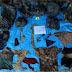 Localizan campo de exterminio en Veracruz, encuentran 166 cuerpos enterrados en fosas clandestinas